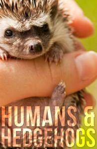 humans hedgehogs pin