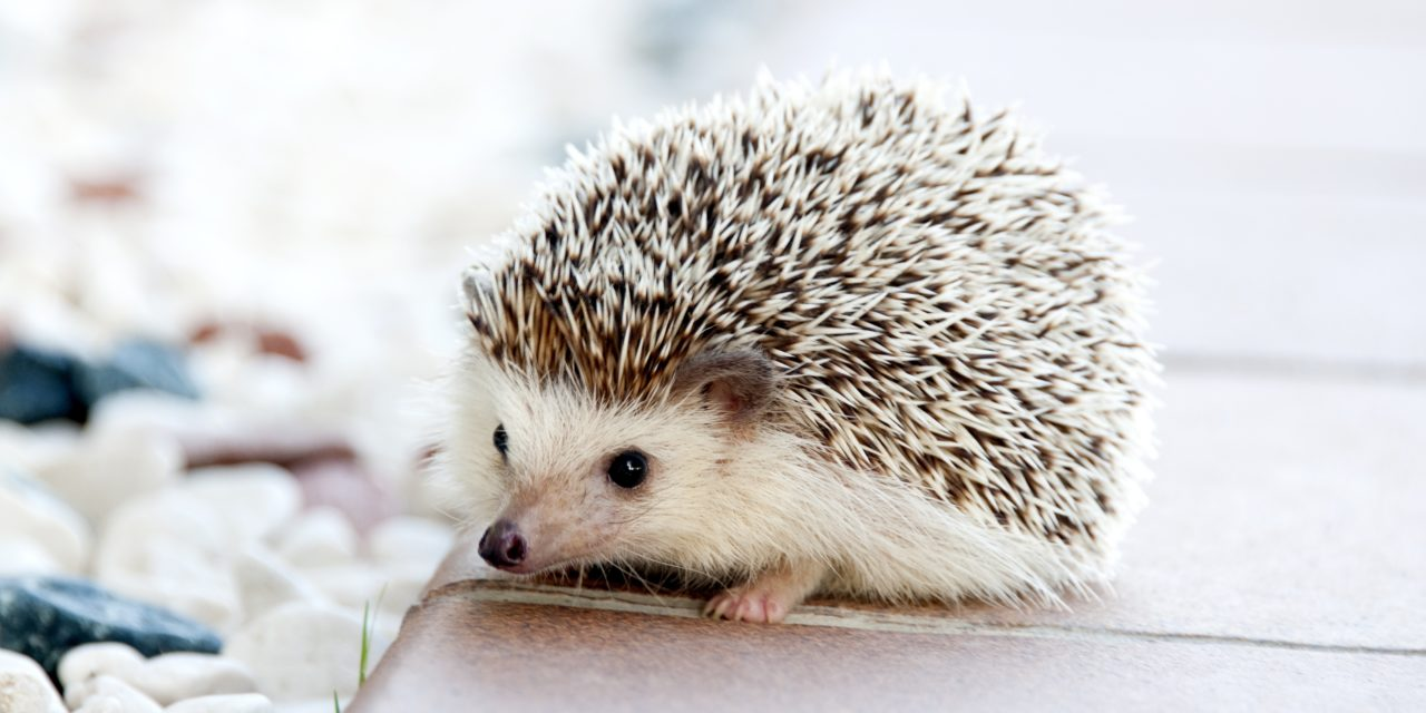 Why Characters Are Like Hedgehogs