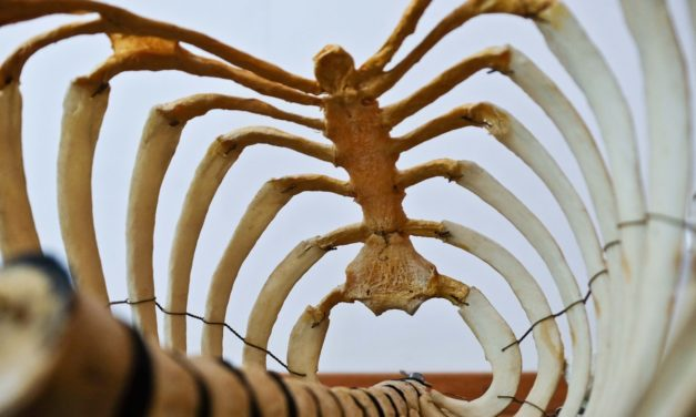 How Skeletons Can Help Your Story